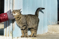 Main frottant un chat Amour Animals Image libre de droits