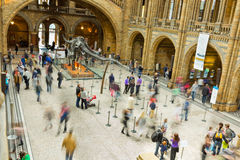 Main hall At London's Natural History Museum. Stock Photography
