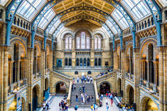Main Hall of the Natural History Museum in London Royalty Free Stock Images