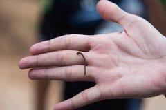Main humaine acérée de sangsue Images stock