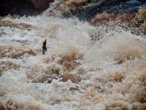 Main humaine collant hors de l'eau image stock