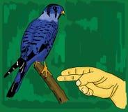 Main humaine et un oiseau bleu Photo stock