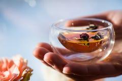 Main humaine tenant le verre de tisane avec les bourgeons roses secs Photo libre de droits