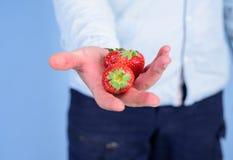 Main masculine avec le fond de bleu de fraises Aide vous-même La main propose la fraise de prise Récolte fraîche du rouge mûr photo libre de droits
