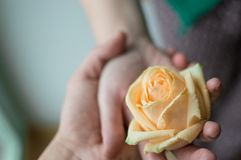 Main masculine tenant la main femelle que tenant la fleur rose de floraison Concept d'amour Photographie stock
