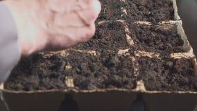 Main masculine tenant la graine de plantation de main Élevage professionnel des jeunes plantes à l'intérieur clips vidéos