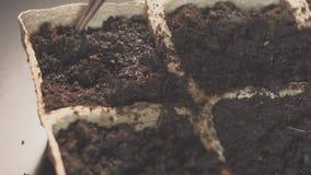 Main masculine tenant la graine de plantation de main Élevage professionnel des jeunes plantes à l'intérieur banque de vidéos