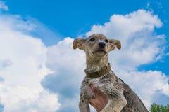 Main masculine tenant un chiot contre le ciel bleu image libre de droits