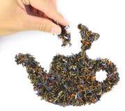 Main, mettant un pincement de thé dans la théière Photo stock