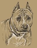 Main monochrome de vecteur du Staffordshire Terrier américain dessinant le PO Illustration Stock