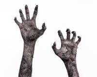 Main noire de la mort, la marche complètement, thème de zombi, thème de Halloween, mains de zombi, fond blanc, mains de maman Image stock