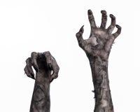 Main noire de la mort, la marche complètement, thème de zombi, thème de Halloween, mains de zombi, fond blanc, mains de maman Photo libre de droits