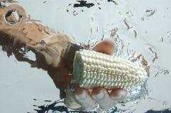 Main obtenant le maïs dans l'eau Images stock