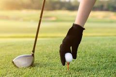 Main plaçant une pièce en t avec la boule de golf Boule de golf de prise de main avec la pièce en t Photo libre de droits