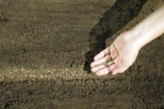 Main plaçant des graines sur le sol Photos libres de droits