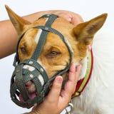 Main pour dire le chien du bout des lèvres de museau Photographie stock libre de droits