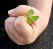 Main protégeant une petite jeune usine verte Photo stock