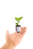 Main retenant la plante verte dans l'ampoule Images stock