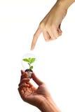 Main retenant la plante verte dans l'ampoule Photographie stock
