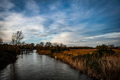 Main river channel and reedbed Royalty Free Stock Image