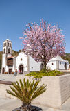 Main square of the city Santiago del Teide and almond tree Stock Images