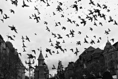 Main square in Timișoara, Romania, Orthodox Cathedral. Timișoara Orthodox Cathedral, Catedrala Mitropolitană din Timișoara, Romania, with many birds flying Royalty Free Stock Photos