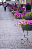 Main street in old town cobblestone and flowers Stock Image