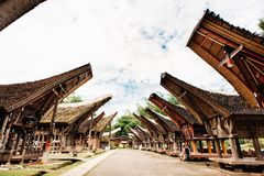 Main street of traditional Tana Toraja village with buffalo in the foreground , tongkonan houses and buildings. Kete Kesu, Rantepa. O, Sulawesi, Indonesia Royalty Free Stock Images