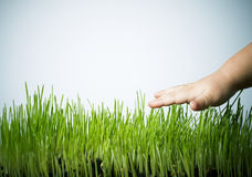Main sur l'herbe Images libres de droits