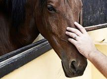 Main sur la tête de cheval Photos libres de droits