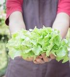 Main sur le groupe du légume de salade Photo libre de droits