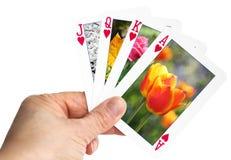 Main tenant jouer la carte montrant la tulipe au printemps Photographie stock