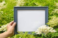 Main tenant le cadre de tableau en fleur Photo libre de droits