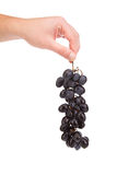 Main tenant le fruit de raisin rouge Photographie stock libre de droits