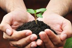 Main tenant le jeune arbre vert avec le sol photos stock