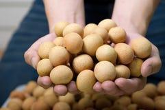 Main tenant le longan frais Photo stock