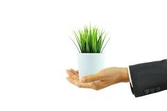 Main tenant le pot de fleur avec l'herbe verte image stock