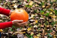Main tenant le potiron sur des feuilles de chute Photo libre de droits