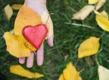 Main tenant les feuilles rouges de coeur et d'automne Photo stock