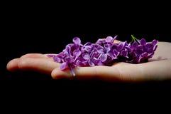 Main tenant les fleurs lilas images stock