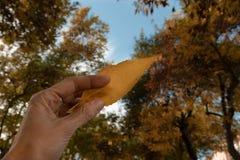 Main tenant une feuille jaune d'automne photo stock