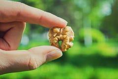 Main tenant une noix Image libre de droits