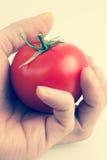 Main tenant une tomate photo libre de droits