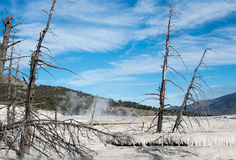Main Terrace in Mammoth Hot Springs Royalty Free Stock Image