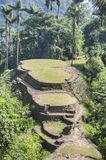 Main terraces of ancient Ciudad Perdida archeological site Stock Image