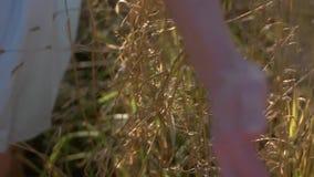 Main touchant le blé banque de vidéos