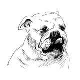Main une tête de chien de dessin Images libres de droits