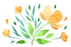 Main vectorisée d'aquarelle dessinant la fleur orange Photos stock