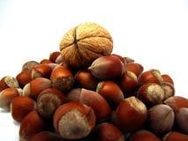 Main walnut Royalty Free Stock Photography