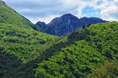 Mainarde av berg Royaltyfria Foton
